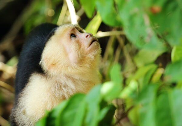 What Animals Are In Costa Rica