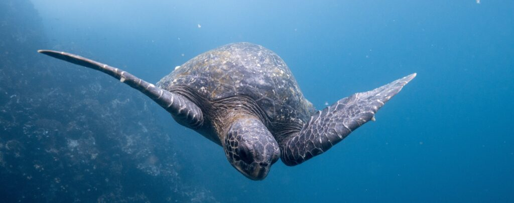 The Galapagos | Your Questions Answered